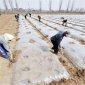 厂家直销顺农塑料农用保温保湿地膜